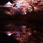 春の福岡 2015