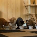 賃貸住宅でペットを飼うときに注意すること